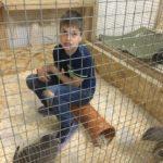 Фантастические животные или детки в клетке